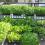 Cách trồng 5 loại rau thông dụng trong thùng xốp, sau 1 tháng đảm bảo ăn rau sạch thả ga